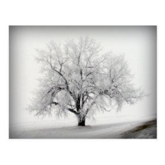 Un árbol solitario de Frostry en la pradera de Tarjetas Postales