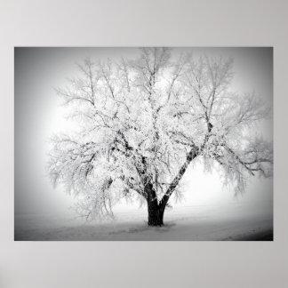 un árbol solitario en la pradera del ND Poster