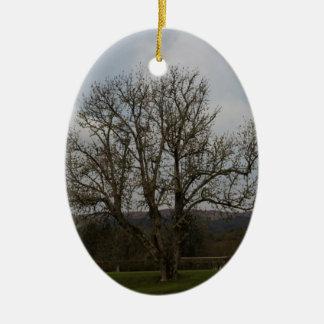 Un árbol viejo en el medio del patio y del jardín ornamento de navidad
