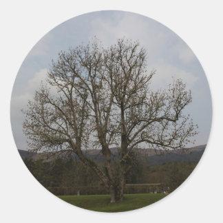 Un árbol viejo en el medio del patio y del jardín