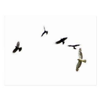 Un asesinato de cuervos postal