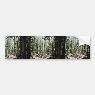 Un Aspen - bosque dominado abeto apenas del norte  Pegatina De Parachoque