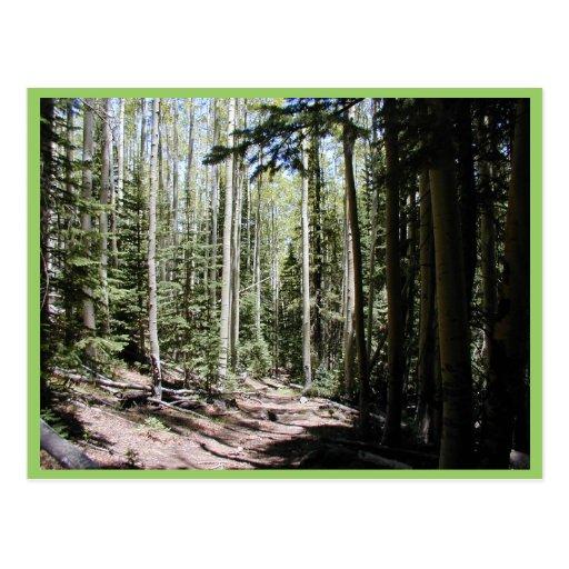 Un Aspen - bosque dominado abeto apenas del norte  Postal