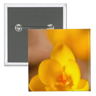 Un azafrán del amarillo florece en Portsmouth, nue Pins