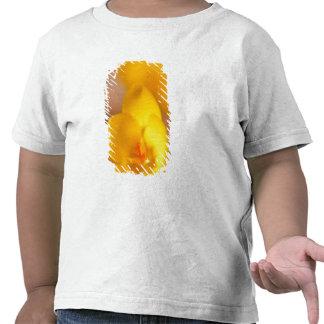 Un azafrán del amarillo florece en Portsmouth, Camisetas