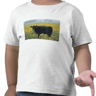 Un becerro en medio de los girasoles del Nebraska Camiseta