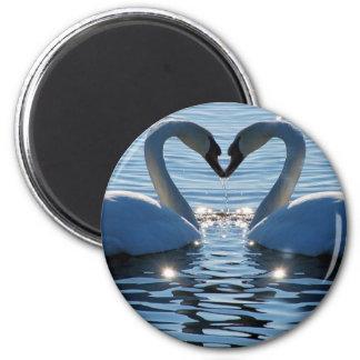 Un beso del corazón del cisne, reflexiones del amo imán para frigorífico