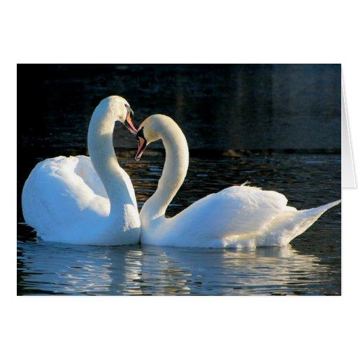 Un beso del corazón del cisne, reflexiones del amo felicitaciones