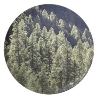 Un bosque del alerce en otoño plato de comida
