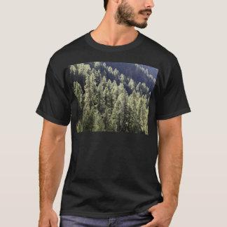 Un bosque del alerce en otoño playera