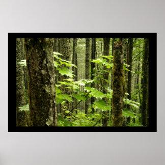 Un bosque envejecido impresiones