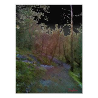 Un bosque fotografía