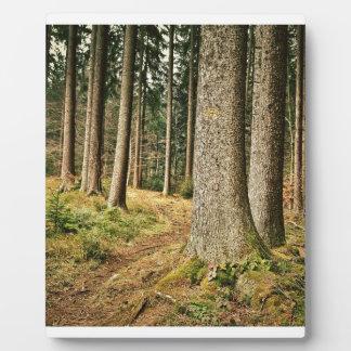 Un bosque placas