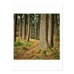 Un bosque postal