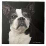 Un Bosten más viejo Terrier en fondo negro Tejas Cerámicas