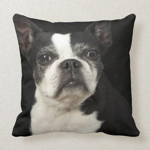 Un Bosten más viejo Terrier en fondo negro Almohadas
