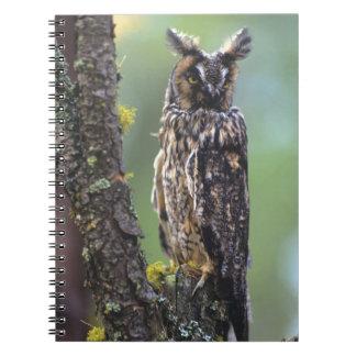 Un búho largo-espigado se encaramó en una rama de  libros de apuntes con espiral