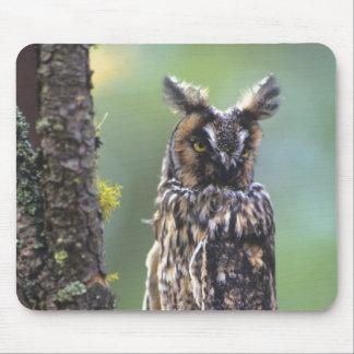 Un búho largo-espigado se encaramó en una rama de  tapetes de ratones