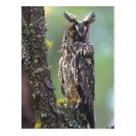 Un búho largo-espigado se encaramó en una rama de tarjetas postales