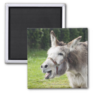 Un burro imanes de nevera