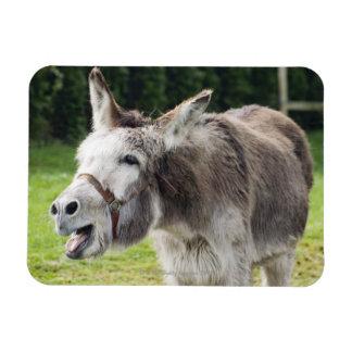 Un burro imán rectangular