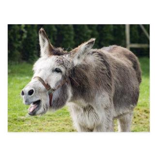 Un burro tarjeta postal