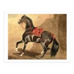Un caballo árabe (w/c colocado en el papel) postal