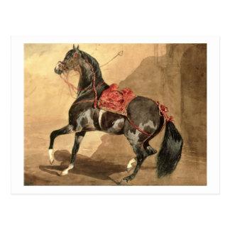 Un caballo árabe (w/c colocado en el papel) tarjetas postales