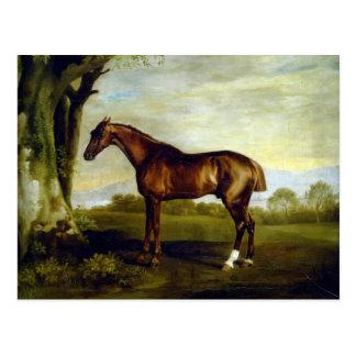 Un caballo de carreras de la castaña de George Stu Tarjeta Postal