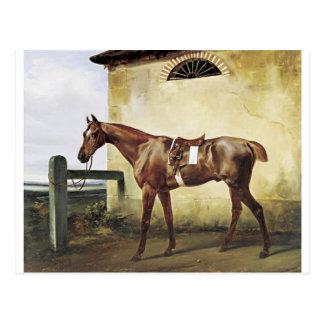 Un caballo de raza ensillado atado a una cerca por postales