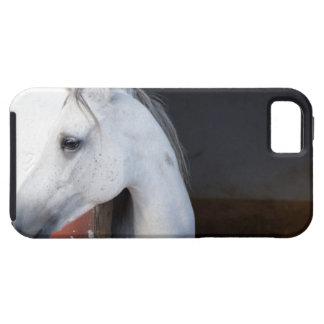 Un caballo (équidos) iPhone 5 funda