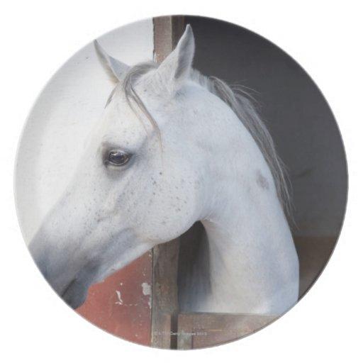 Un caballo (équidos) plato de comida