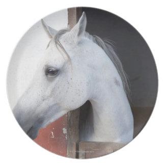 Un caballo (équidos) platos de comidas