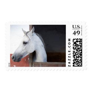 Un caballo (équidos) sellos