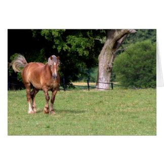 Un caballo hermoso felicitación
