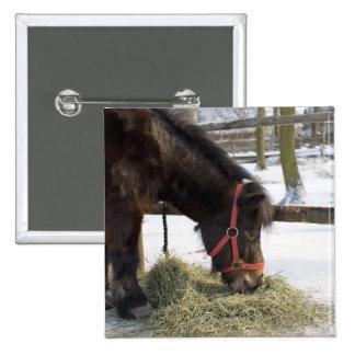 Un caballo nativo originalmente de Gotland donde Pin Cuadrada 5 Cm