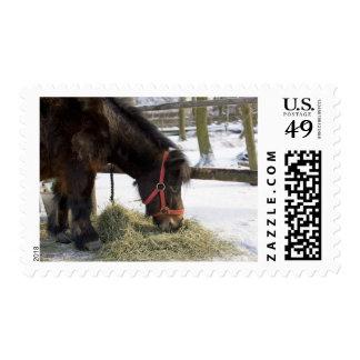 Un caballo nativo originalmente de Gotland donde Sellos