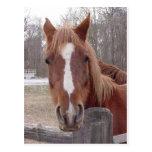 Un caballo por supuesto tarjeta postal