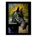 Un caballo, por supuesto tarjetas postales