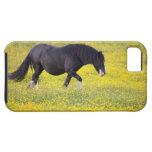 Un caballo que camina en un campo de flores amaril iPhone 5 Case-Mate protector