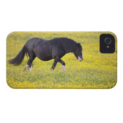 Un caballo que camina en un campo de flores amaril iPhone 4 cárcasa
