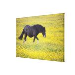 Un caballo que camina en un campo de flores amaril lona envuelta para galerías