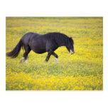 Un caballo que camina en un campo de flores amaril tarjetas postales