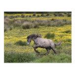 Un caballo que corre en un campo de wildflowers am tarjetas postales