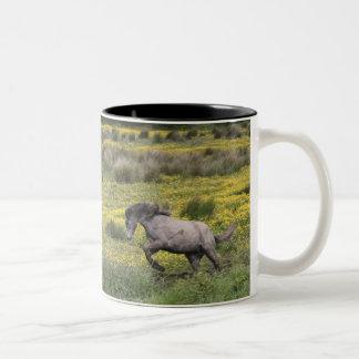 Un caballo que corre en un campo de wildflowers am tazas