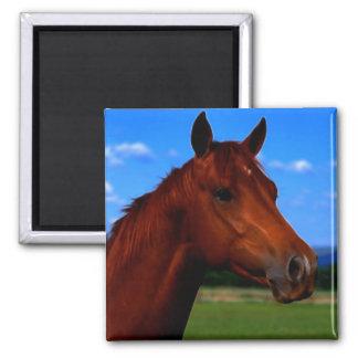 Un caballo que se coloca orgulloso imán cuadrado