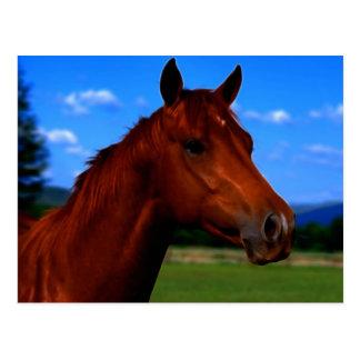Un caballo que se coloca orgulloso tarjetas postales