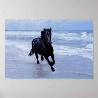Un caballo salvaje y libre póster