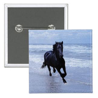 Un caballo salvaje y libre pins