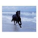 Un caballo salvaje y libre postales